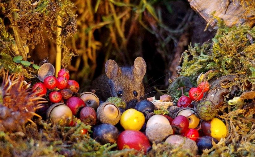 Hombre le construyó una mini aldea a pequeños ratoncitos[fotos]