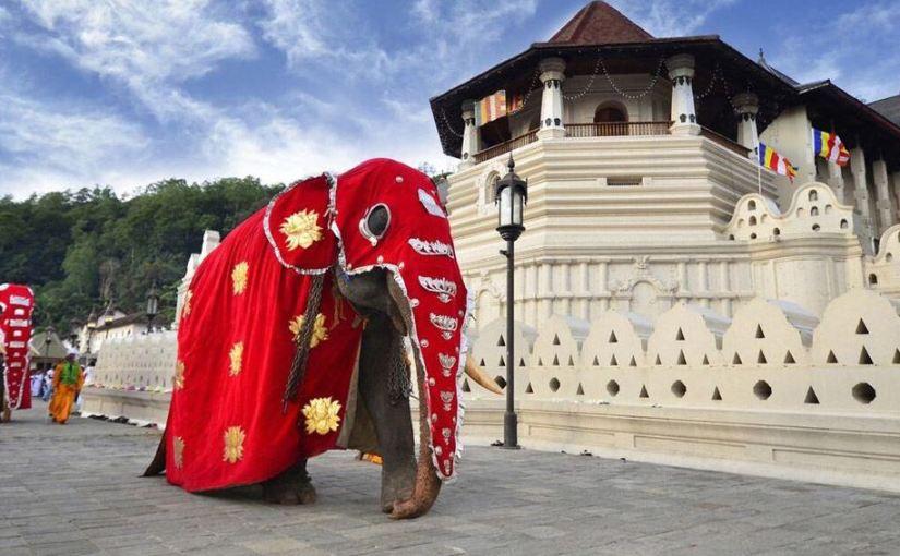 [Vídeo] De impacto: Elefante se asusta y genera caos en fiestabudista
